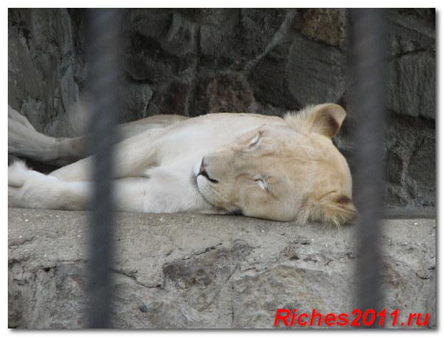 зоопарк-сказка-крым