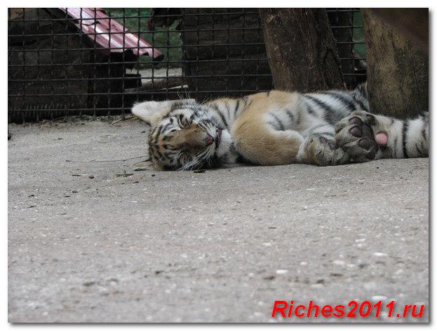 зоопарк-сказка-ялта