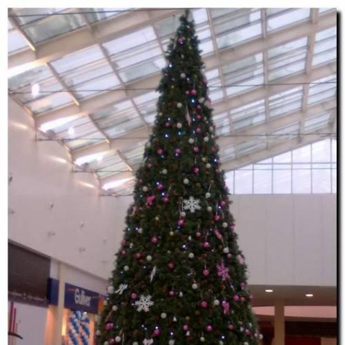 Новогодняя елка: искусственная или живая?