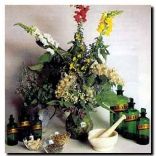 Натуральные лекарства для нашей жизни.