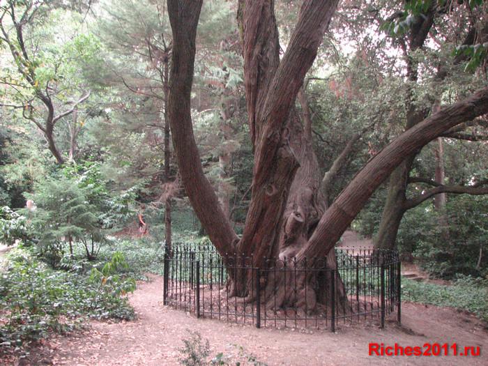 Поселок Никита и Никитский Ботанический сад.