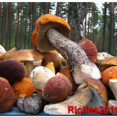 Чем полезны грибы — инструкция в картинках.