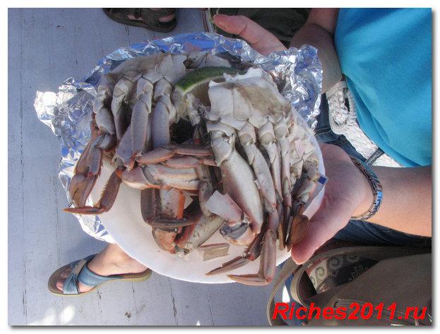 bludo is kraba